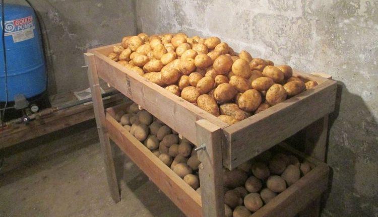 Хранить картофель нужно в холодном месте, но следить за тем, чтобы он не промерз.