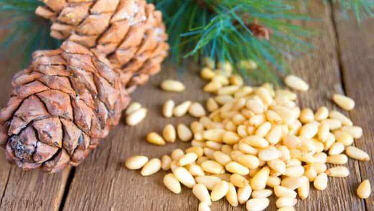 Кедровые орехи: польза и вред для здоровья