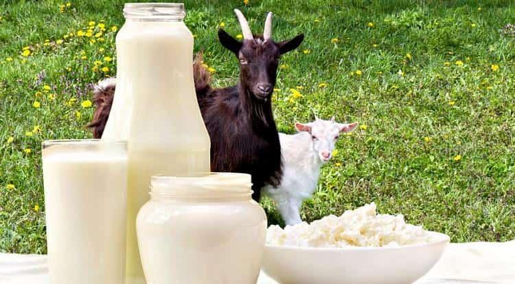 Поговорим о пользе и вреде козьего молока.