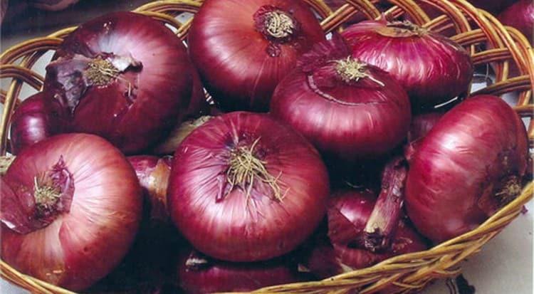 Красный лук может принести как пользу, атак и вред для организма, поэтому употреблять его нужно в умеренных количествах.