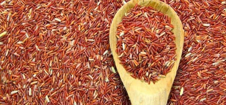 Красный рис: польза и вред для организма