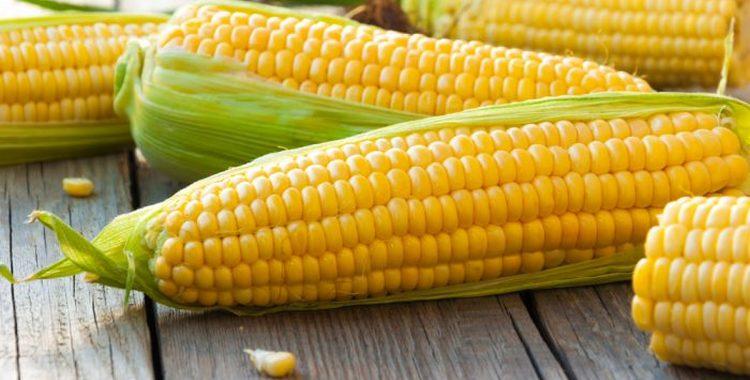 Кукуруза – польза и вред для здоровья