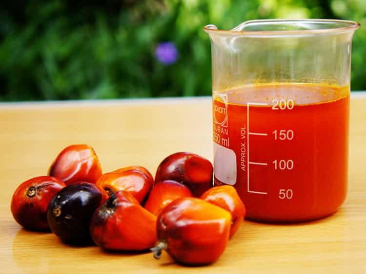 пальмовое масло в детских смесях вред