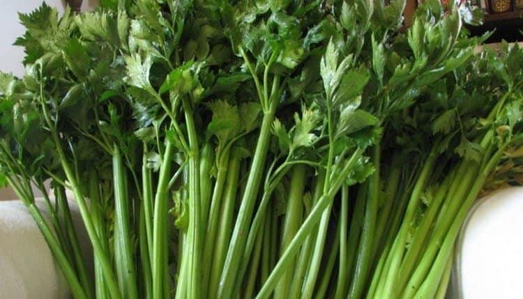 Покупая овощ, обращайте внимание на то, не привяли ли листики, насыщен ли цвет.
