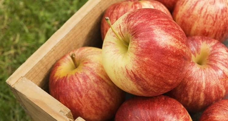 Какая польза и вред от печеных яблок