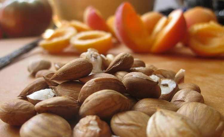 Как правильно употреблять и какими дозами абрикосовые косточки