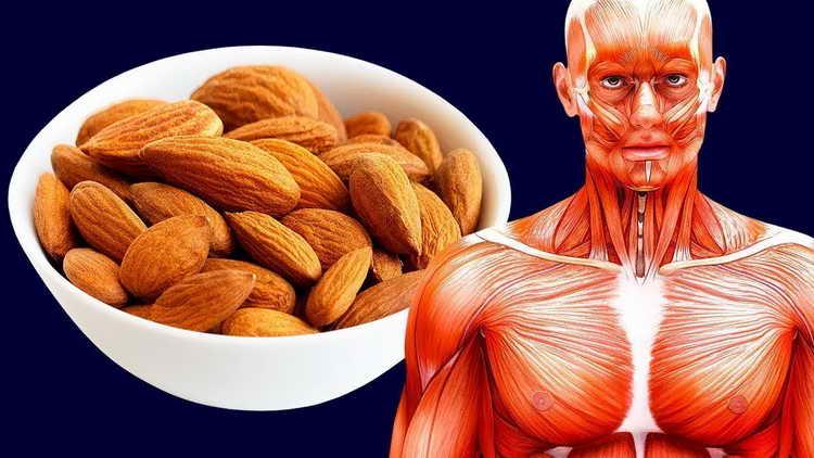 орехи миндаль польза и вред для женского организма