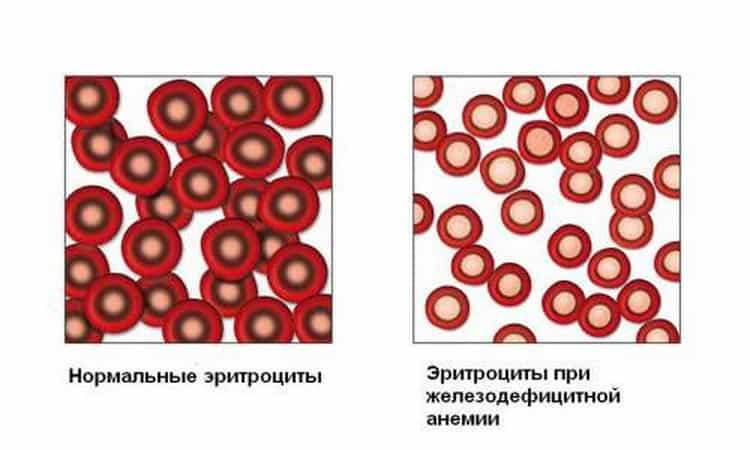 помидоры польза и вред для организма женщины