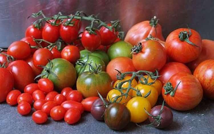 помидоры польза и вред для организма человека
