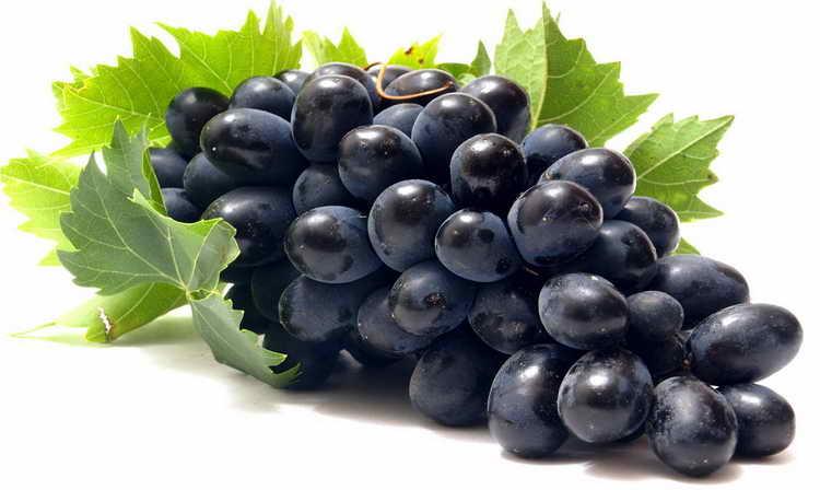 черный виноград польза и вред для организма