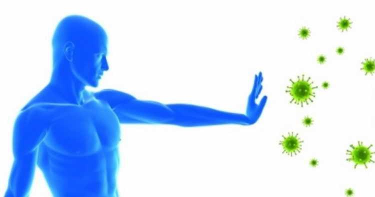 янтарная кислота польза для организма женщины