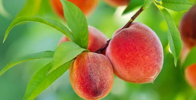 сколько калорий в 1 персике