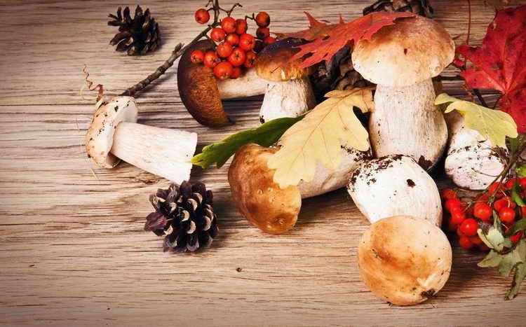 грибы вешенки польза и вред