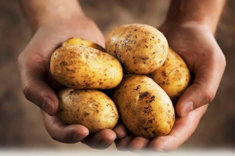 картофель фри калорийность