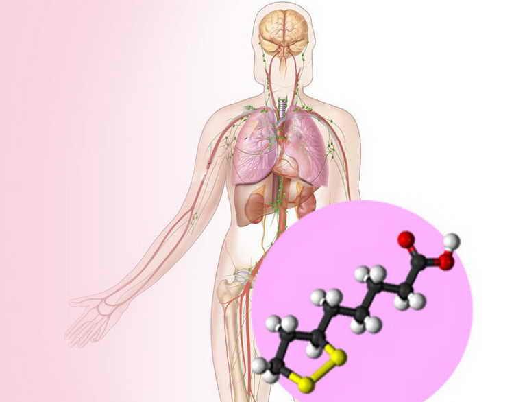 липоевая кислота для похудения отзывы как принимать